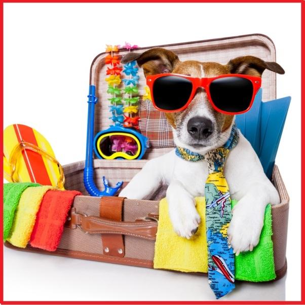 mascota-viaje-2-1024x1024